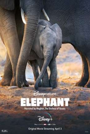 Elefante - Legendado Torrent Download